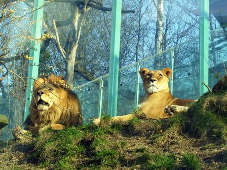 lvy zoo Liberec